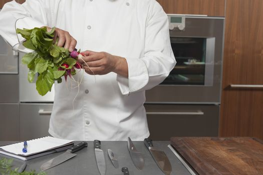 Midsection of male chef holding bundle of radishes in commercial kitchen