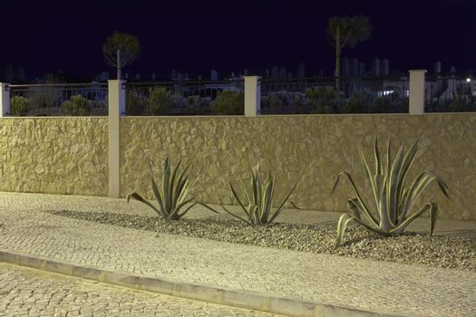 Drought resistant plants in gravel bed Portugal