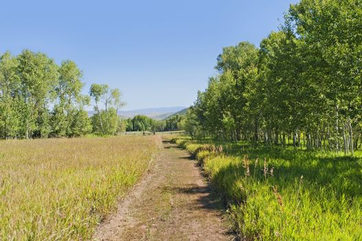 A tranquil  green country scene with a path leading through the grass field surrounded by trees