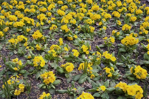 Yellow Flowers in London Park