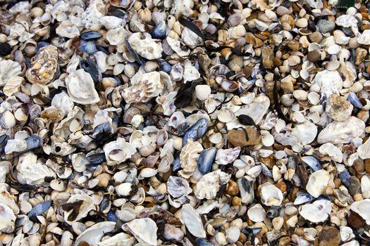 Close-up of seashells on seashore