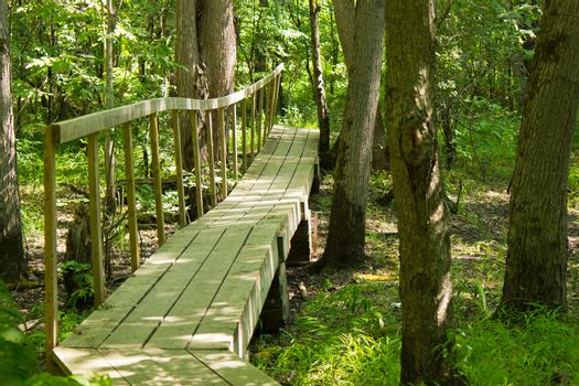 Wooden bridge on a hiking trail in the forest
