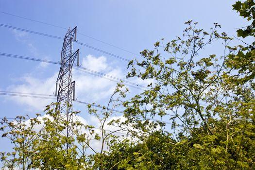 Electricity Pylon above trees