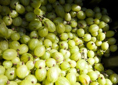 Close up of bunch of gooseberries