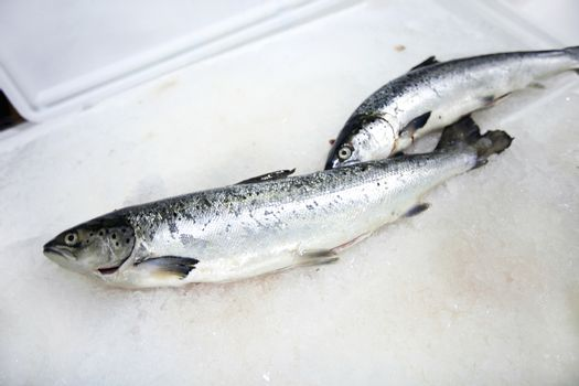 Freshly caught fishes on ice