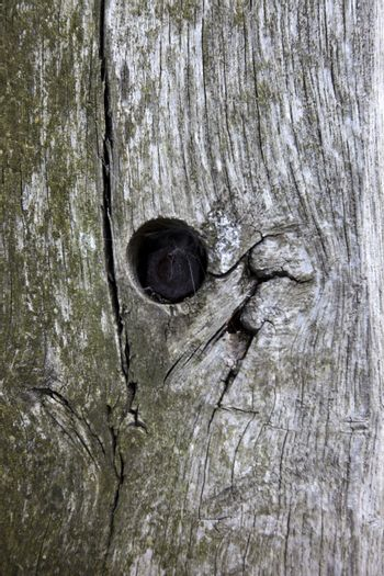 Full frame shot of tree trunk with hole