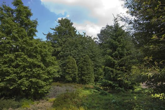 View of trees in public park