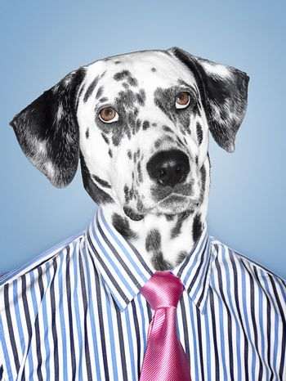 Dalmatian Businessman looking at camera