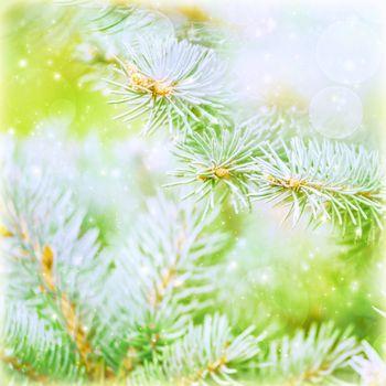 Pine tree branch background