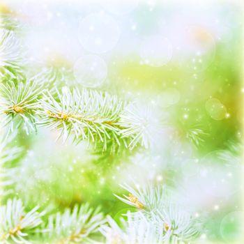 Evergreen tree branch backdrop