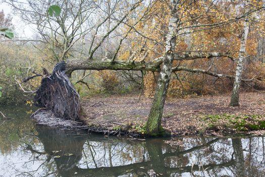 Fallen tree in a marsh