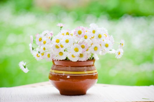 A bouquet of daisies in a pot at the table