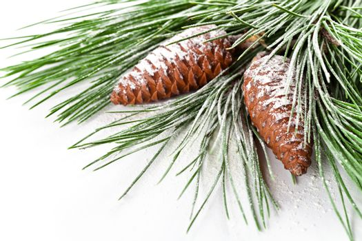fir tree branch with pinecones