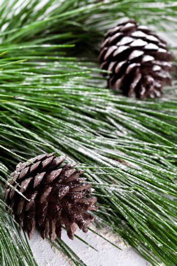 fir tree with pinecones