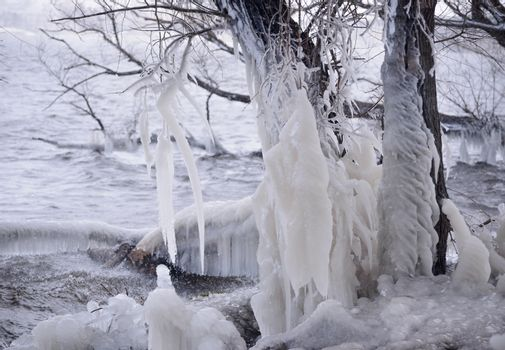 Beautiful Natural Ice Ornaments on the Trees