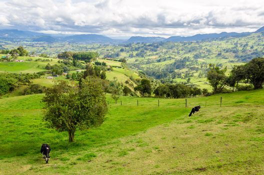 Landscape of Colombian countryside with cows in Cundinamarca, Colombia