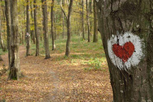 Love heart on tree