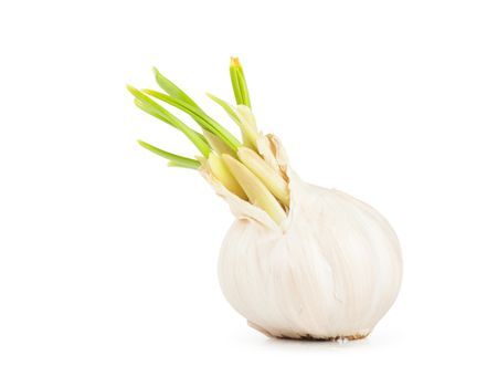 Closeup view of garlic isolated on white background.