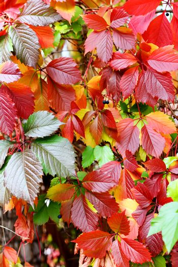 Colored leafs in a park at autumn season