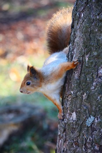 Squirrel on the tree at the park