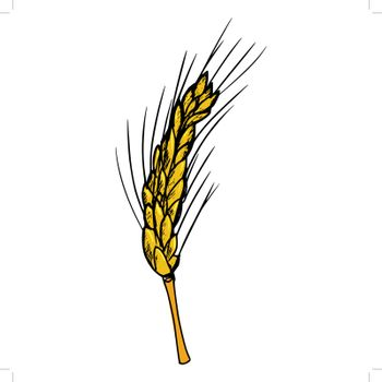 hand drawn, cartoon, sketch illustration of ear of wheat