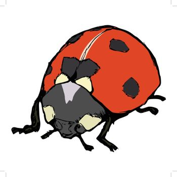 hand drawn, cartoon, sketch illustration of ladybird