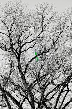 Balloon on a bare tree