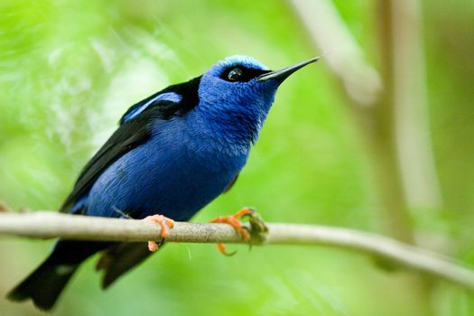 Bird with blue feathers