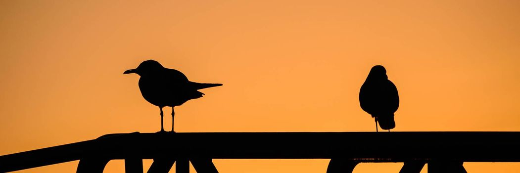 Silhouette of two birds perching at sunset, Key West, Monroe County, Florida, USA