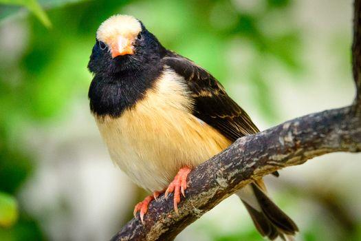 Black and Beige Bird