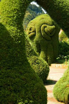 Bushes and hedges trimmed