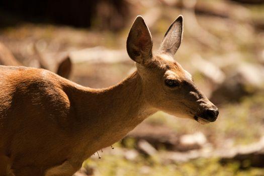 Deer in countryside