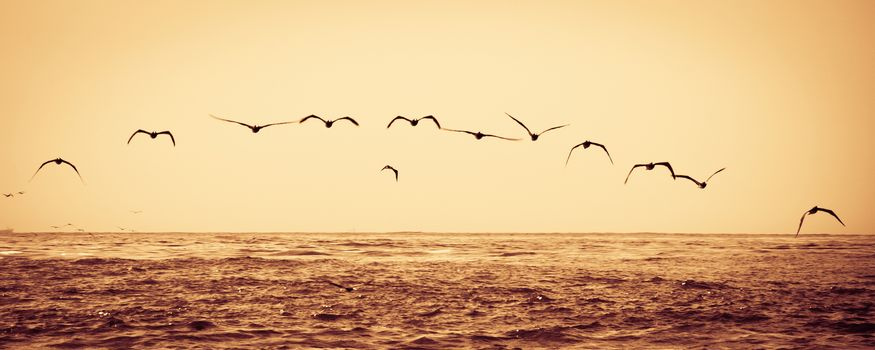 Flock of birds flying over sea at sunset.
