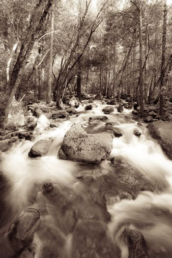 River flowing through a forest