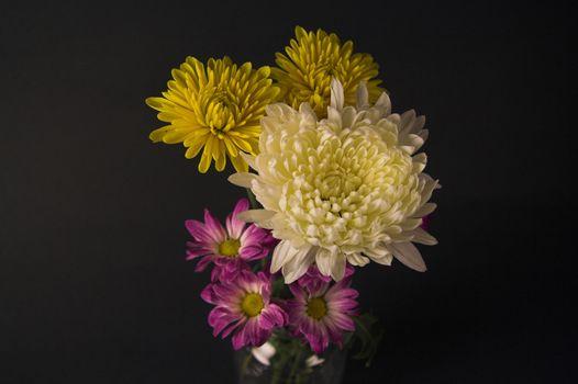 dahlia and daisy flowers