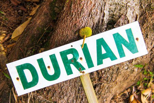 Sign saying durian