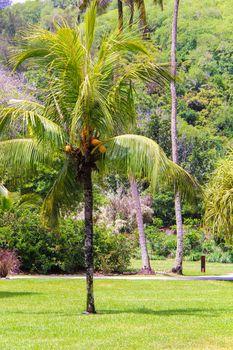 Palm tree on luxury hotel in Seyshelles