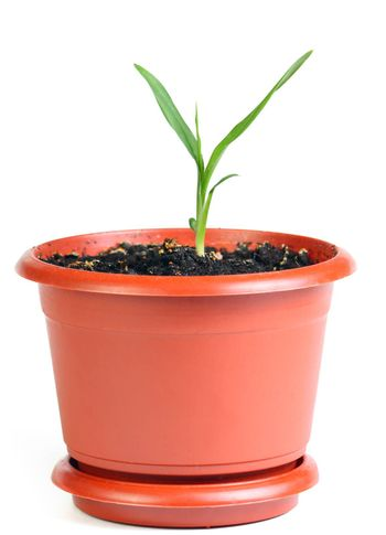Sprout in the flowerpot isolated at the white background