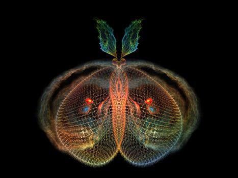 Elegance of Butterfly