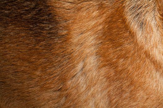 Fur Piece