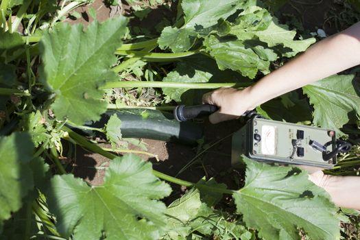 Measuring radiation levels of zucchini