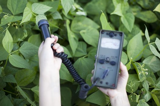 Measuring radiation levels of vegetable