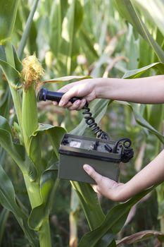 Measuring radiation levels of corn