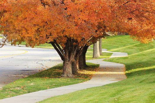 Sidewalk with flowering pear trees