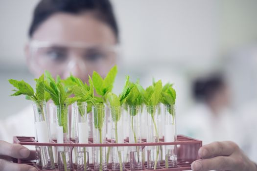 Female scientist with young plants at lab