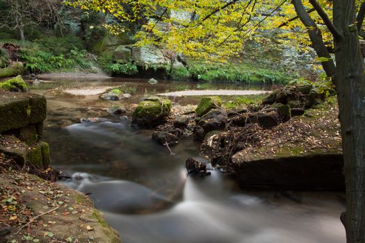 Rapids flowing along forest