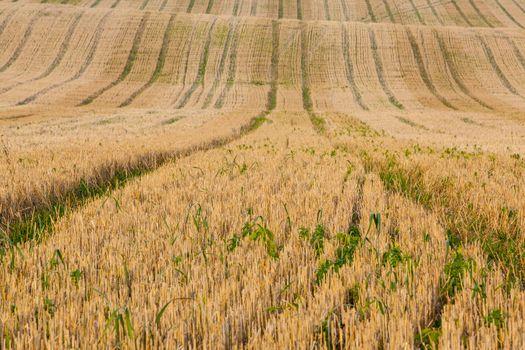 Rural fields