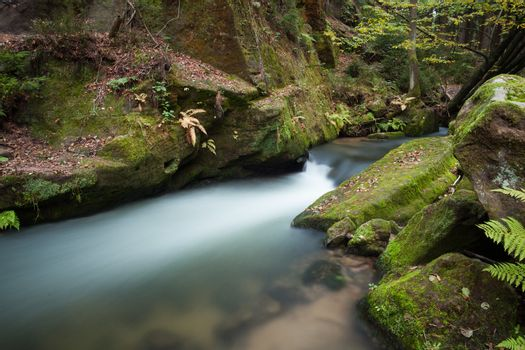 Rapids flowing along lush forest
