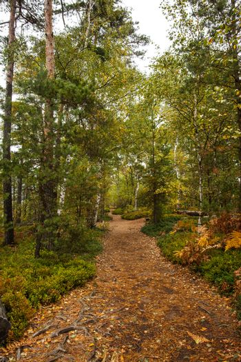 Scenic view of walkway along lush forest