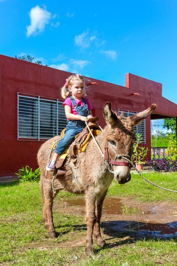 cute child riding a miniature Donkey